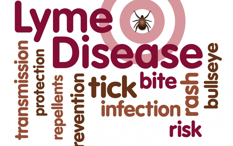 Hepatitis C and lyme disease
